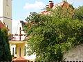 Pfarrhaus (Klein Strehlitz).JPG