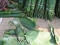Phrynium pubinerve.Laos.jpg