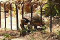 PikiWiki Israel 18003 Turtle.jpg