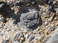Pillow Lava of Nisyros volcano in Greece.jpg