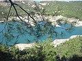 Pinus halepensis (naturalised), Adana, Turkey (14).jpg