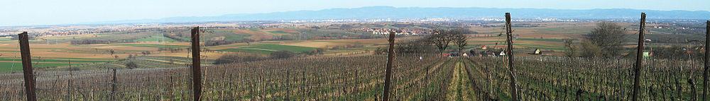 Plaine Alsace Scharrach banner.JPG