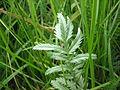 Plant 10 (6979487447).jpg