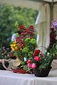 Plantes i Flors a Sant Feliu de Guíxols.jpg