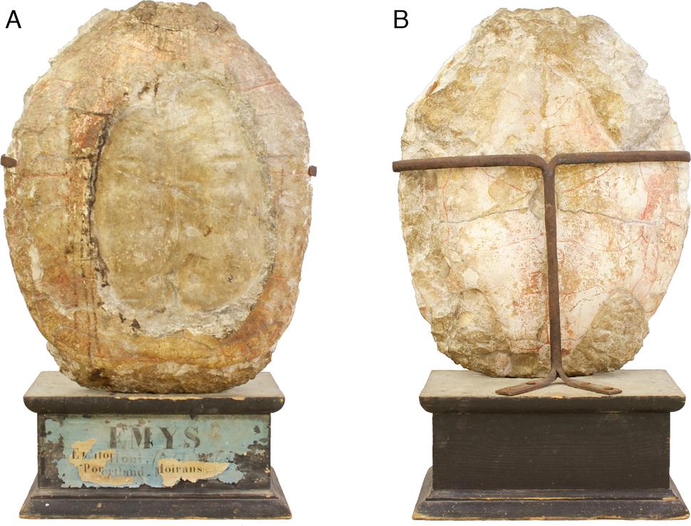 Plesiochelys holotype