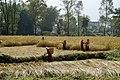 Pokhara 33700, Nepal - panoramio.jpg