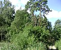 Poland. Gmina Jedwabno. Forests 014.JPG