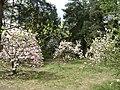 Poland. Warsaw. Powsin. Botanical Garden 036.jpg