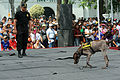 Policía Canina Hacen una Exhibición (6911498583).jpg