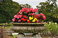 Powderham Castle rose garden (7702).jpg