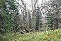 Prales na Ostrém - panoramio.jpg