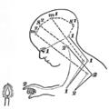 Principles of Psychology (James) v1 p25b.png