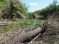 Psilskyi Landscape Reserve (05.05.19) 05.jpg