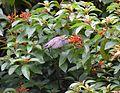 PurpleSunbird2.jpg