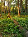 Quehanna Wild Area Warmth.jpg
