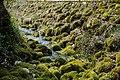 Quellen des Livenza Flusses in Polcenigo, Provinz Pordenone, Italien, Europäische Union.jpg