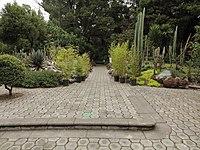 Quitos botaniska trädgård-IMG 8856.JPG