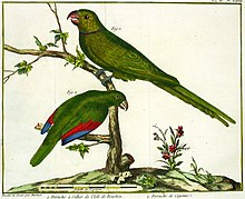 Illustration of two green parrots on branches