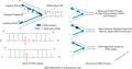 RNA primer.png