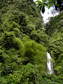 dense rainforest with an waterfall