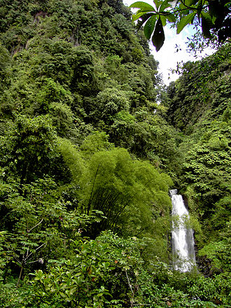 Saint George Parish, Dominica - Rainforest at Trafalgar Falls