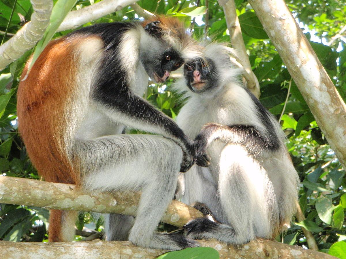 wildlife of zanzibar wikipedia