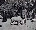 Rhinoceros in Giza zoological garden 1912.jpg