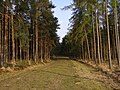 Ride in the Ipley Inclosure, New Forest - geograph.org.uk - 398141.jpg