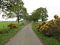 Road by Saddlebank - geograph.org.uk - 479504.jpg