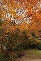 Rokko alpine botanical garden21n4272.jpg