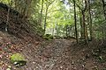 Romania - trail in forest.jpg