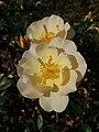 Rosa Amber Sun 2018-09-21 1495.jpg