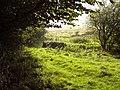 Rough Pasture, Park End Farm, Levens - geograph.org.uk - 1546844.jpg