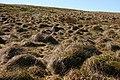 Rough grazing - geograph.org.uk - 1247628.jpg