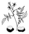 Roze fig.15 à 17.png