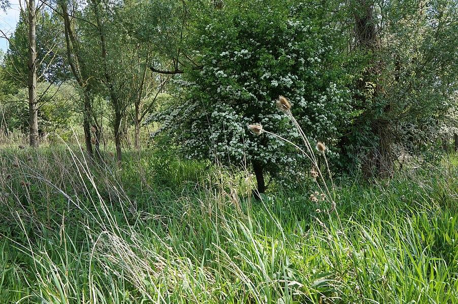 La Réserve naturelle régionale du pré des Nonnettes dans le  Nord-Pas-de-Calais France