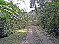 Rua - panoramio (19).jpg