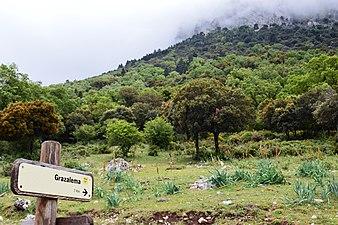 """Ruta """"El Pinsapar"""" - Parque Natural de la Sierra de Grazalema.jpg"""