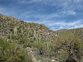 Sabino Canyon (5621307612).jpg