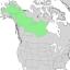 Salix arbusculoides range map 2.png
