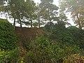 Sandstone cliff - geograph.org.uk - 603125.jpg