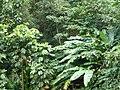 Sankt Lucia - panoramio - georama (22).jpg