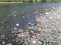 Sarala River Ordzhonikidzevskiy r-n, Khakasiya Republits, Russia - panoramio (5).jpg