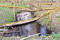Schlangen - 2015-04-09 - LIP-058 Oesterholzer Bruch (20).jpg