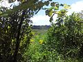 Sentier du point de vue sur grand étang depuis la plaine des palmistes - panoramio.jpg