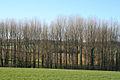 Silverton, a belt of trees near Old Heazille - geograph.org.uk - 114197.jpg