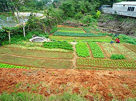 Small farm in Hainan Province 01.jpg
