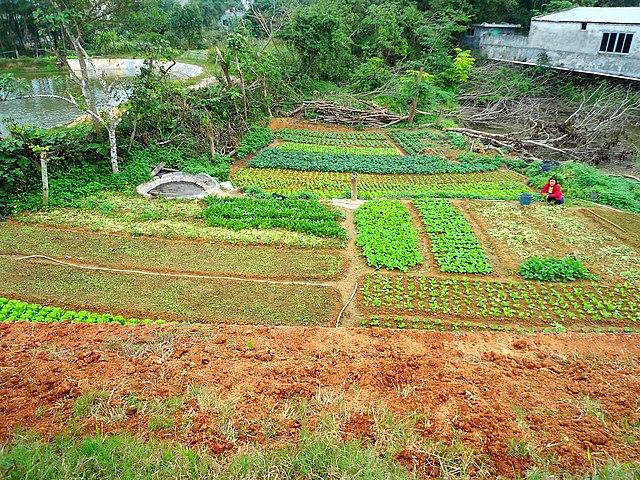 File:Small Farm In Hainan Province 01.jpg