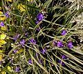 Small purple flowers in garden.jpg