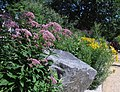 Smithsonian Gardens in July (19465484624).jpg